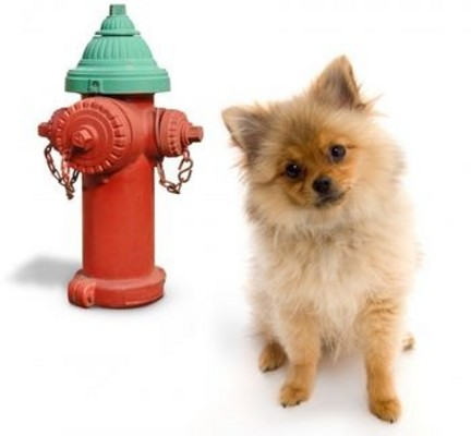 Product picture Dog Potty Training - Potty Train Your Dog In No Time!